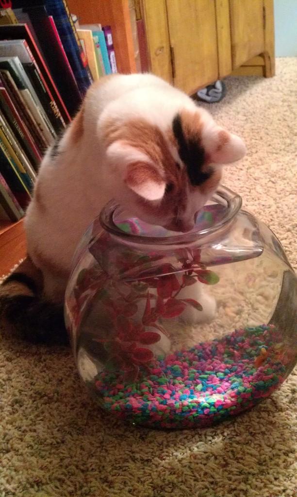 cat meets fish