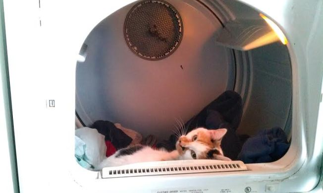 You don't mind a few, or say hundreds of white hairs on your clean laundry, right?