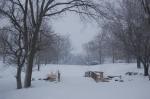 Winter Woods1
