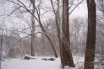 Winter Woods2