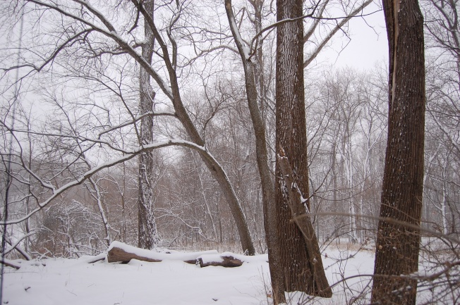 Winter Woods2