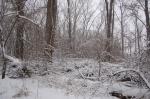 Winter Woods 3