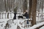 Winter Woods 4