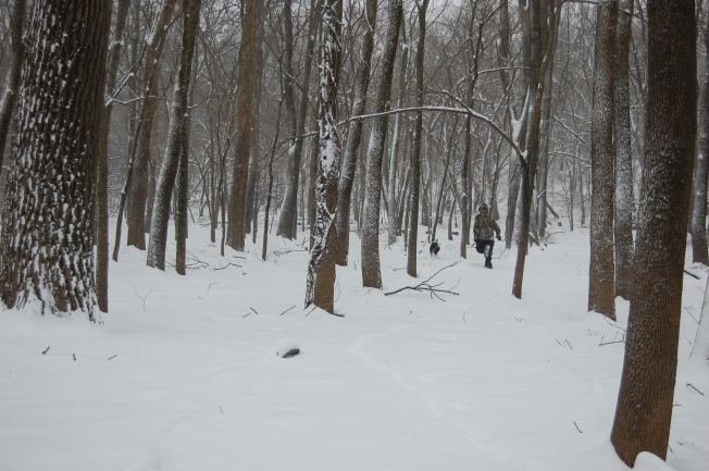Winter Woods 5
