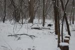 Winter Woods 6