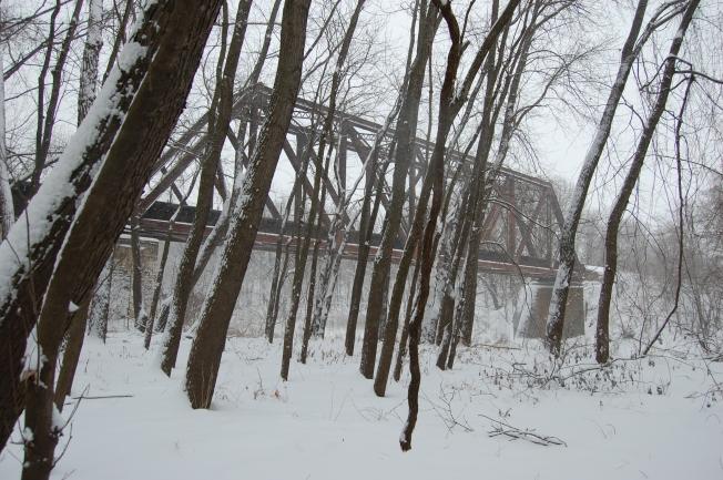 Winter Woods 8