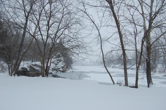 Winter Woods 9