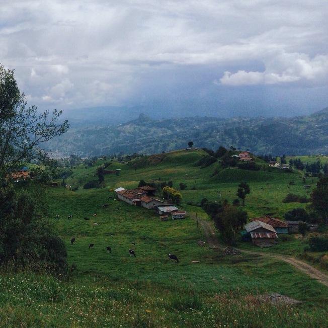 No shortage of cows in Ecuador.